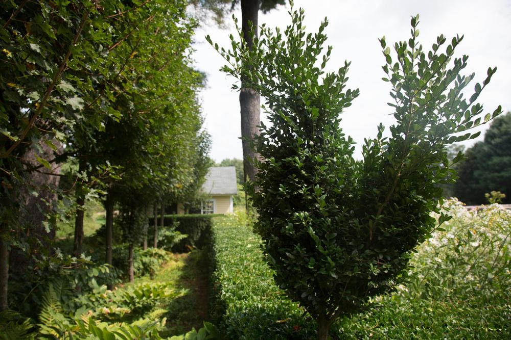 John de Lellis Gardens 829.jpg