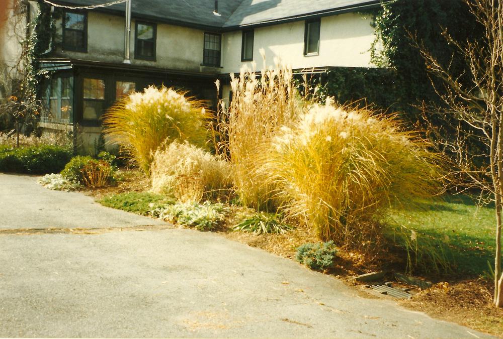 1_Whit Brown Herb garden Before.jpg