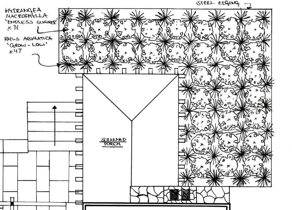 Hydrangea:rhus aromatica bed.jpg