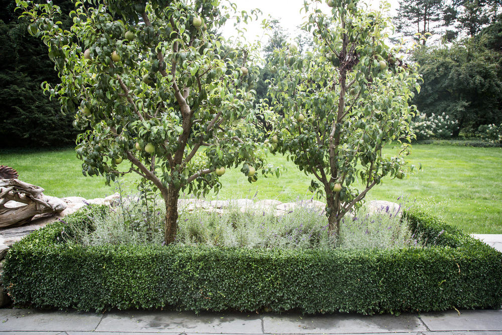 Trees, Shrubs & Orchards