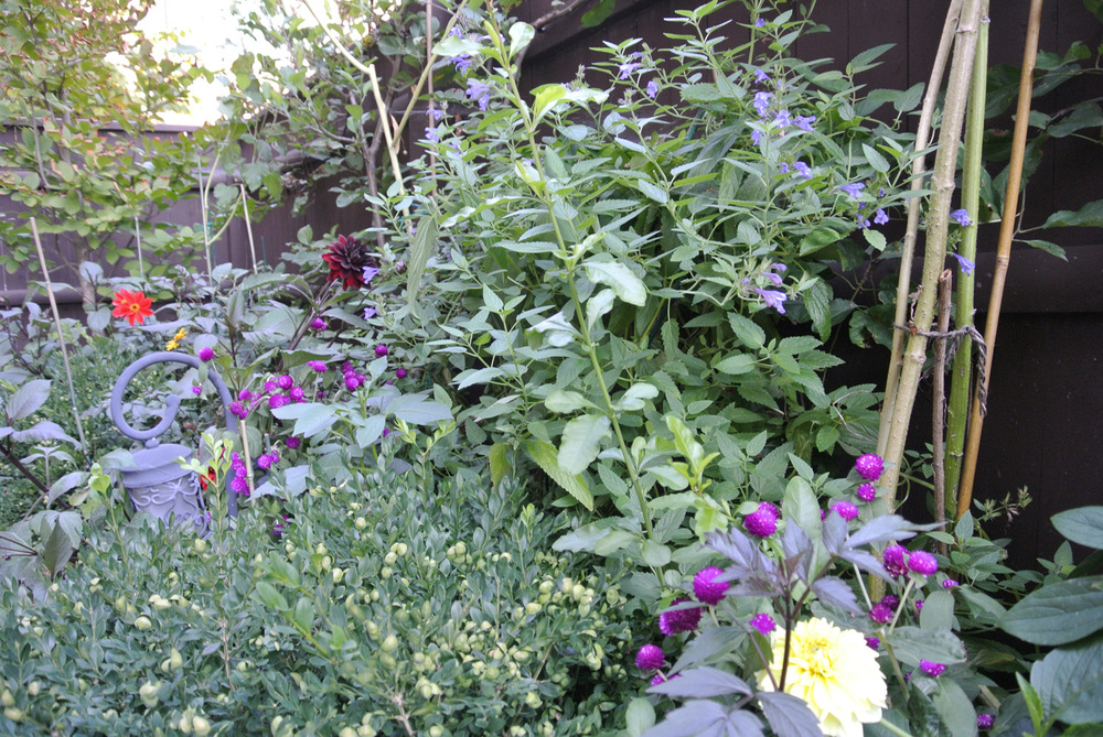 John de Lellis Gardens 57.jpg
