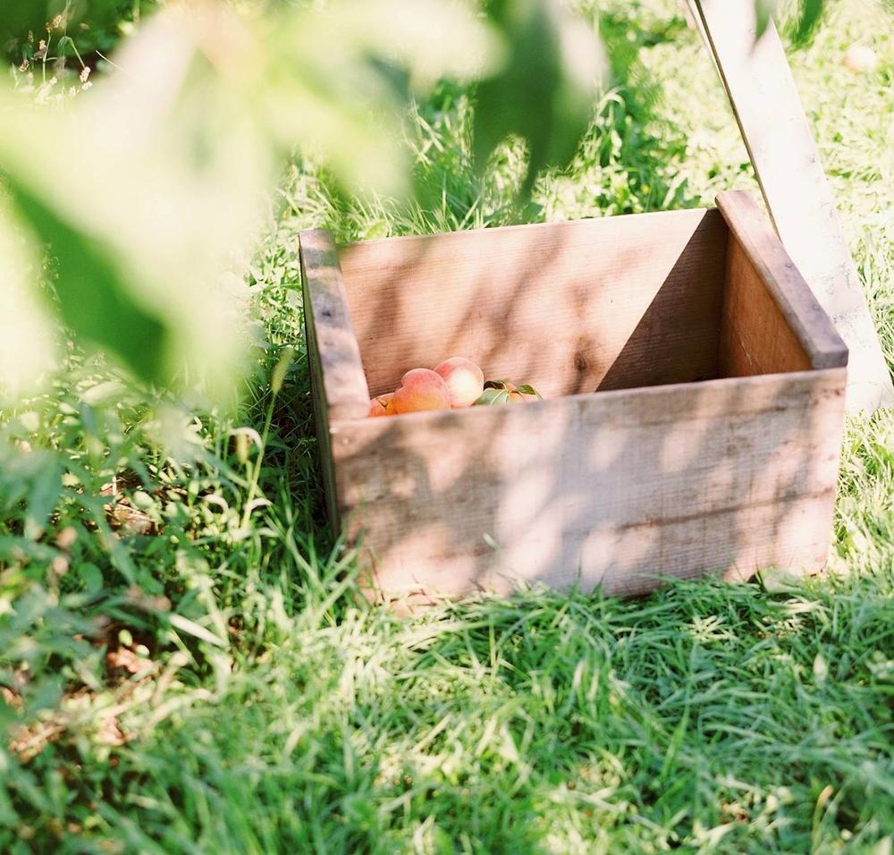 Peaches_Box