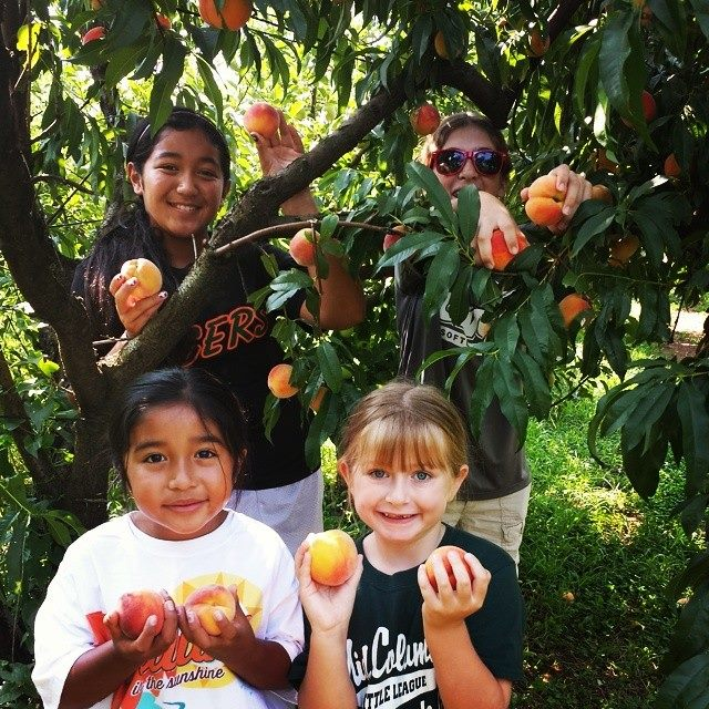 A group of cousins picking peaches together this August at Mt. View Orchards.