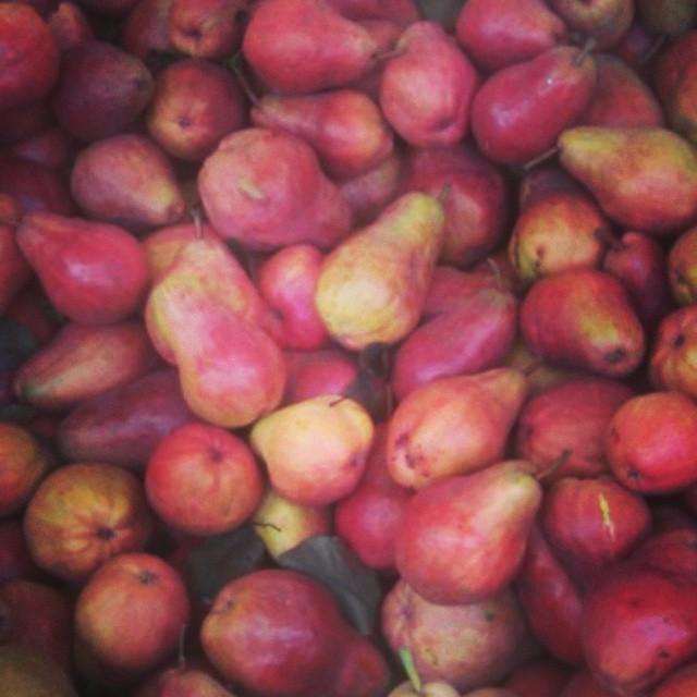 Ripe bartlett pears