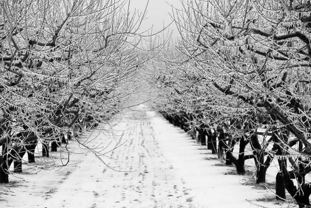 orchard on ice