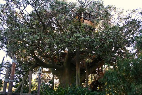 Swiss family Robinson's Tree House