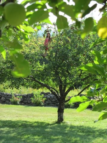 Young girl climbing an apple tree