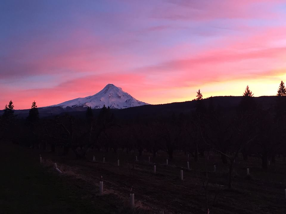 sunset mt hood