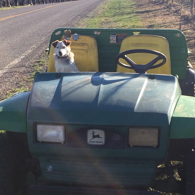 Little lady my favorite copilot!