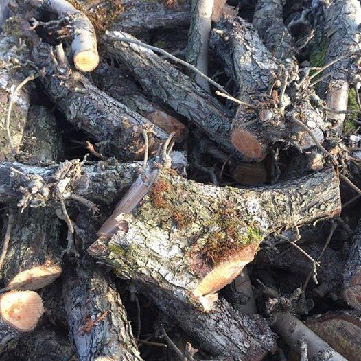 pear fruit wood