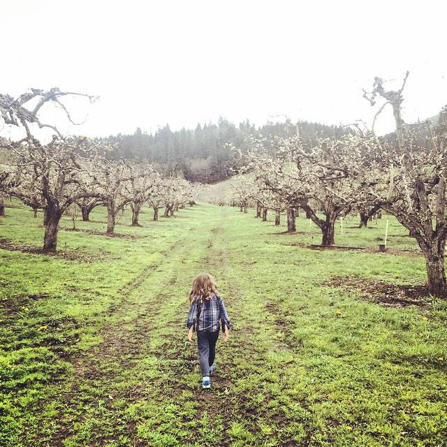 This is a picture of my sweet friend Tanah's little boy taking a stroll through the orchard.