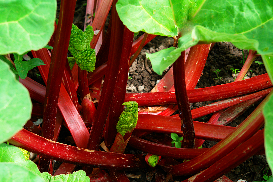 (I have a secret fantasy of being given a bouquet of rhubarb in lieu of rosesone day from my lover...