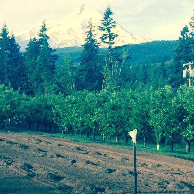 2015 Pumpkin Patch with Mt Hood in the background. Bring your cameras this Autumn Friends!!!