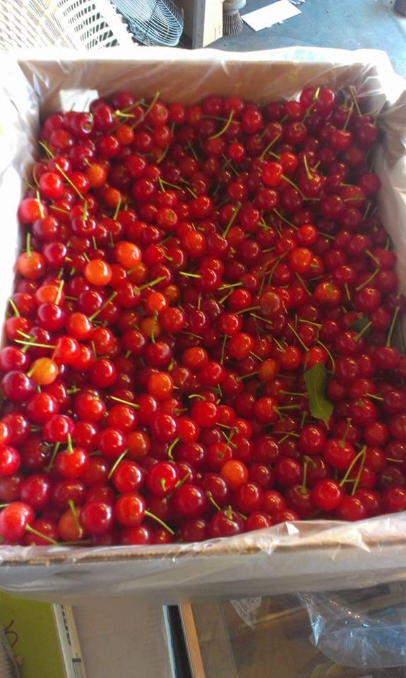 Sour Pie Cherries
