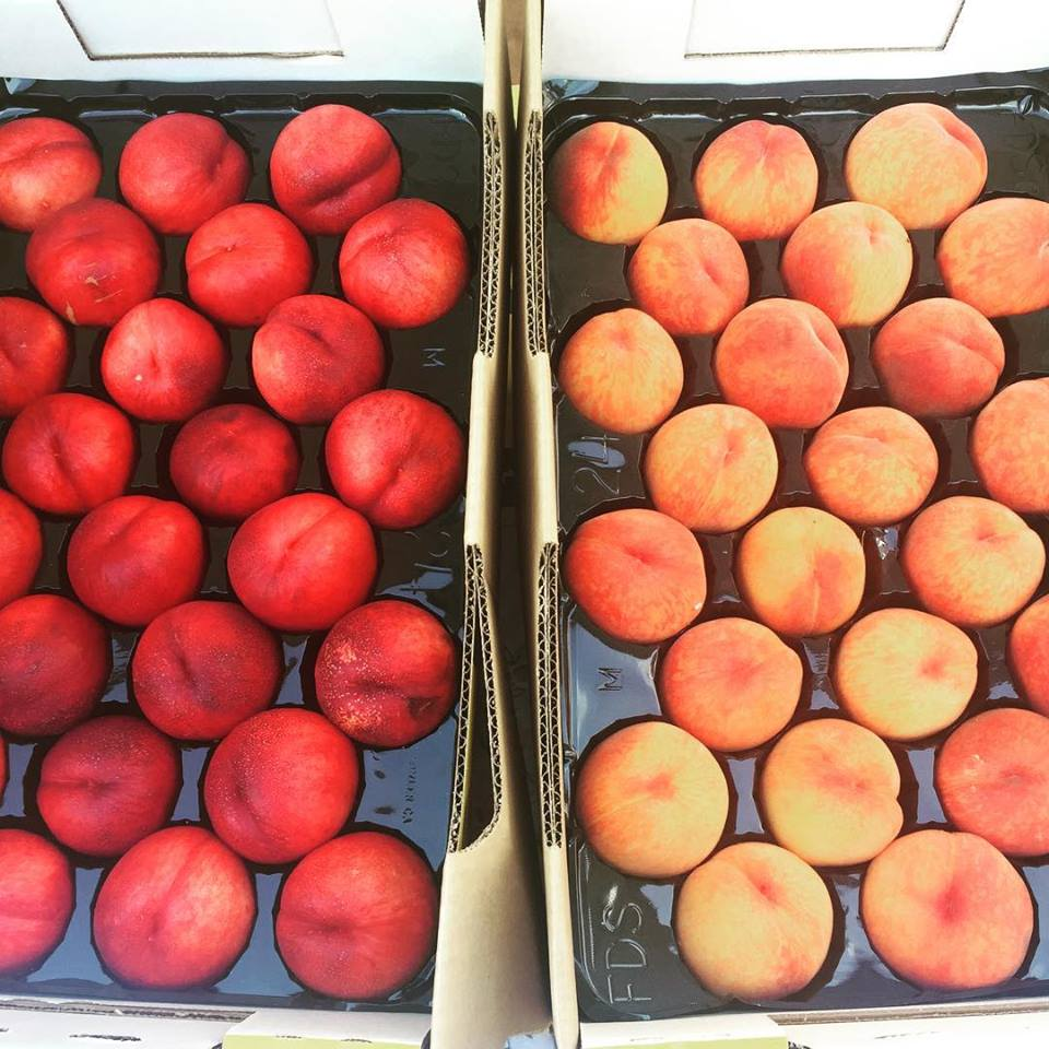 nectarines and apricots