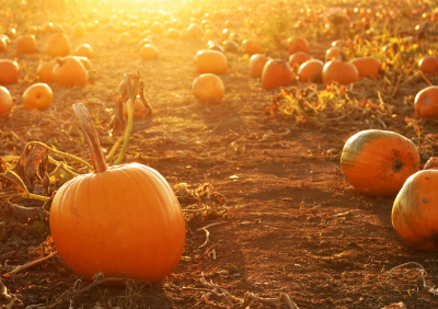 pumpkin-patch-1.jpg