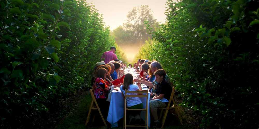 We are having farm to table dinners in the middle of the row of trees this summer, To be cont...
