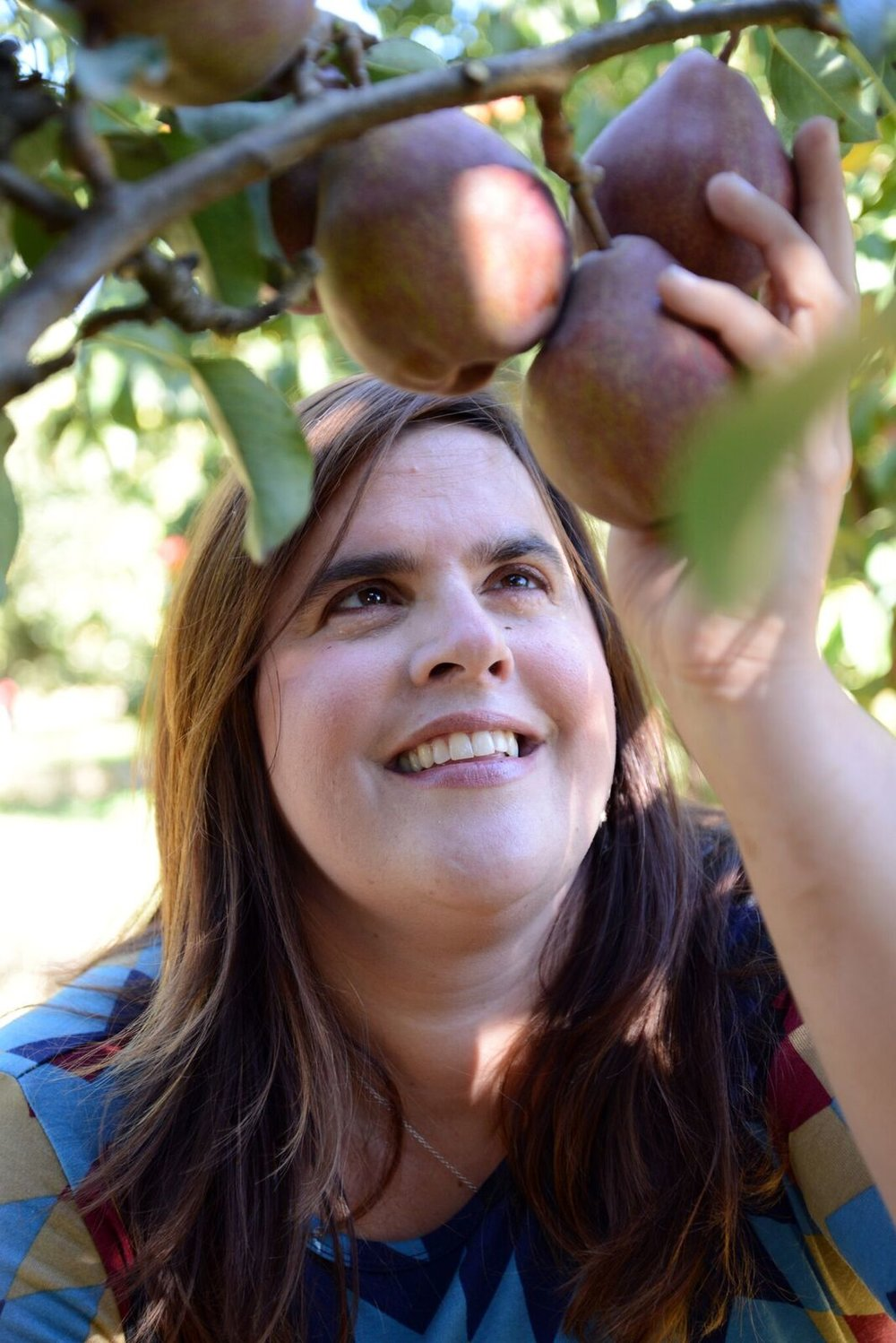 Harvesting pears: Photo by Ben Mitchell/Hood River News