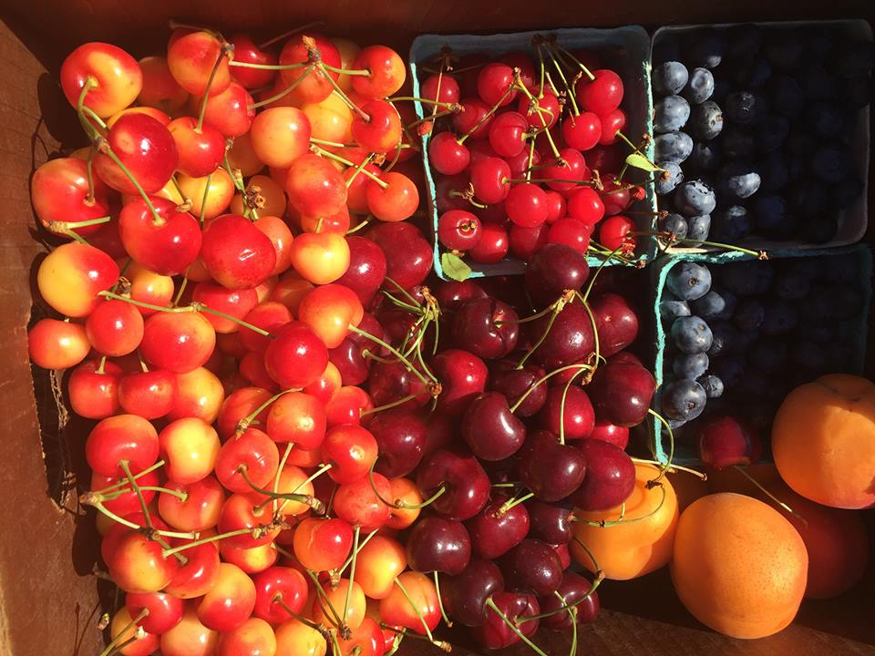 To sign up for a delicious box such as this each week, head to ALL FRUIT CSA to learn more