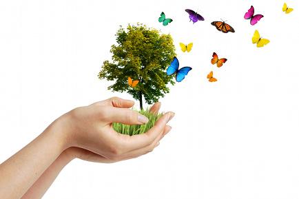 Butterfly tree.jpg