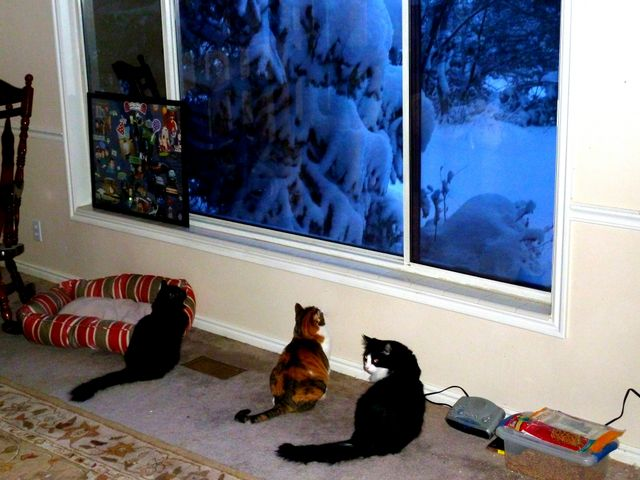 Watching snow fall...