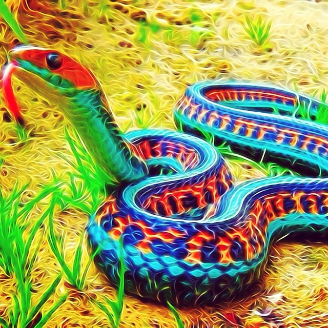 I can't imagine a more beautiful snake. #tangledfx #psychedelic
