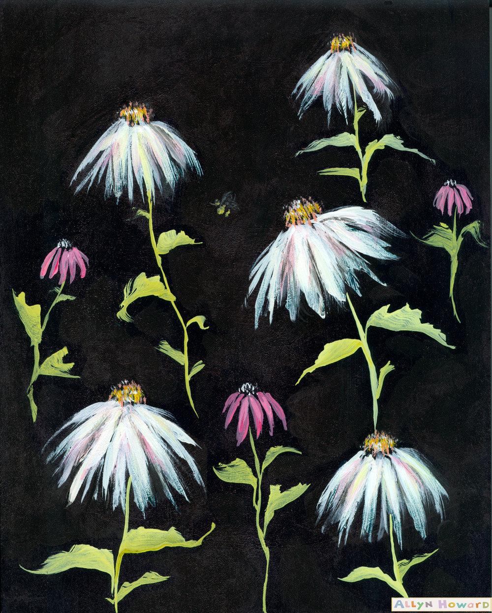 Allyn_Howard_white-wildflowers_daisies.jpg
