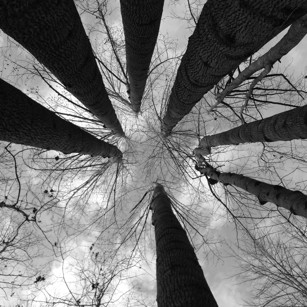Photo of tree or something timberish - (note - keep black and white)