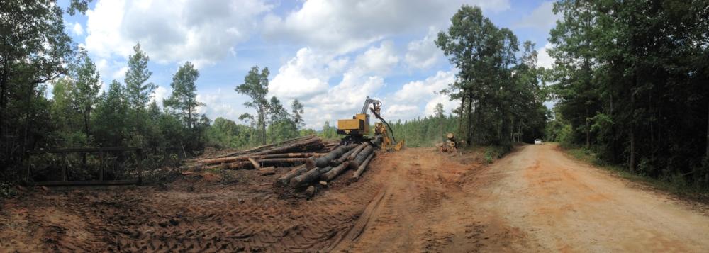 The logging deck at a harvest site.