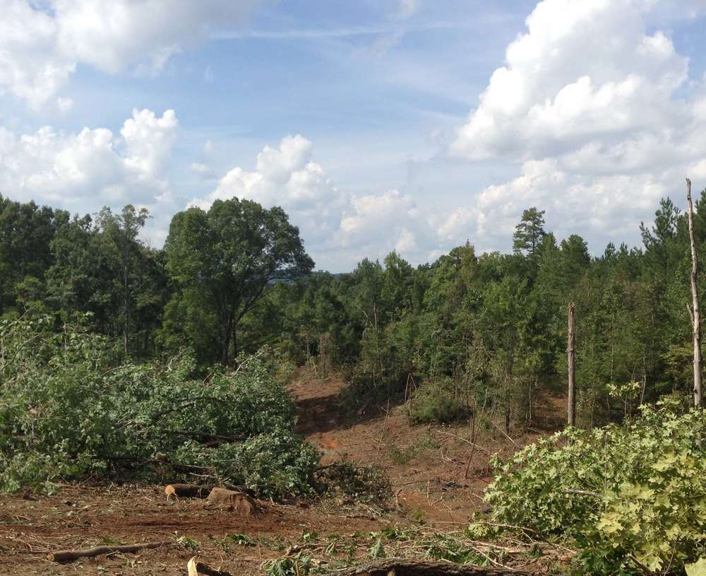A clearcut harvest site