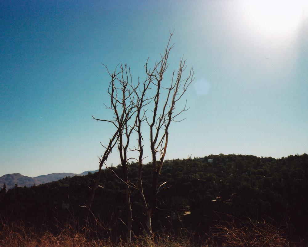 alangastelum-72.jpg
