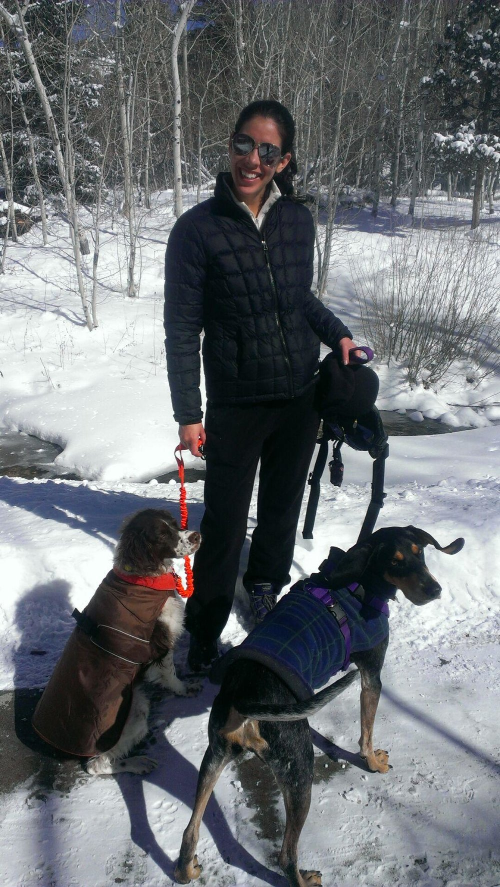 Snow Dogs in Salida, CO