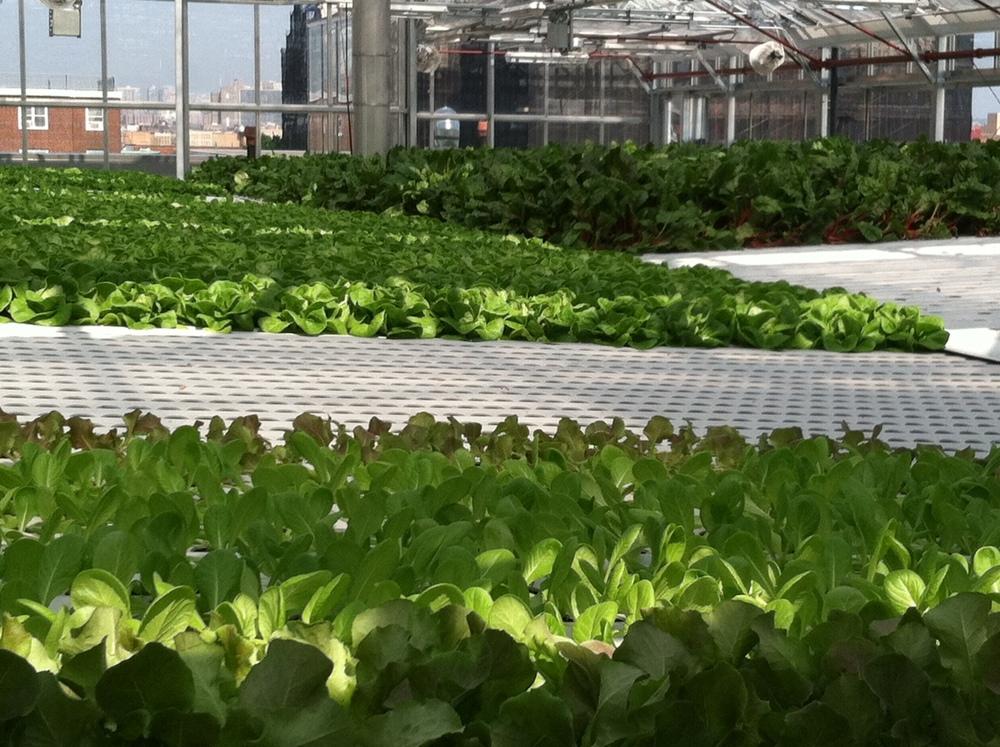 Arbor House_rooftop hydroponic farm.jpg