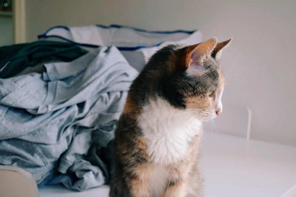 Kitten Ruby & Cake