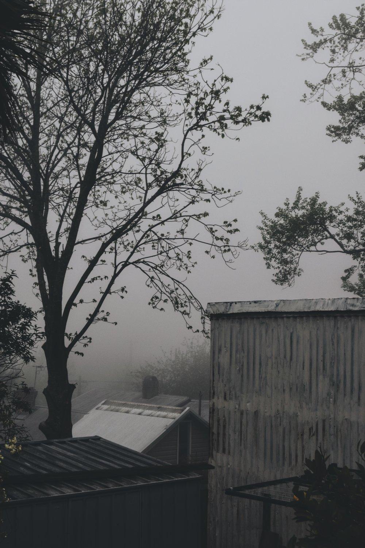 misty katoomba