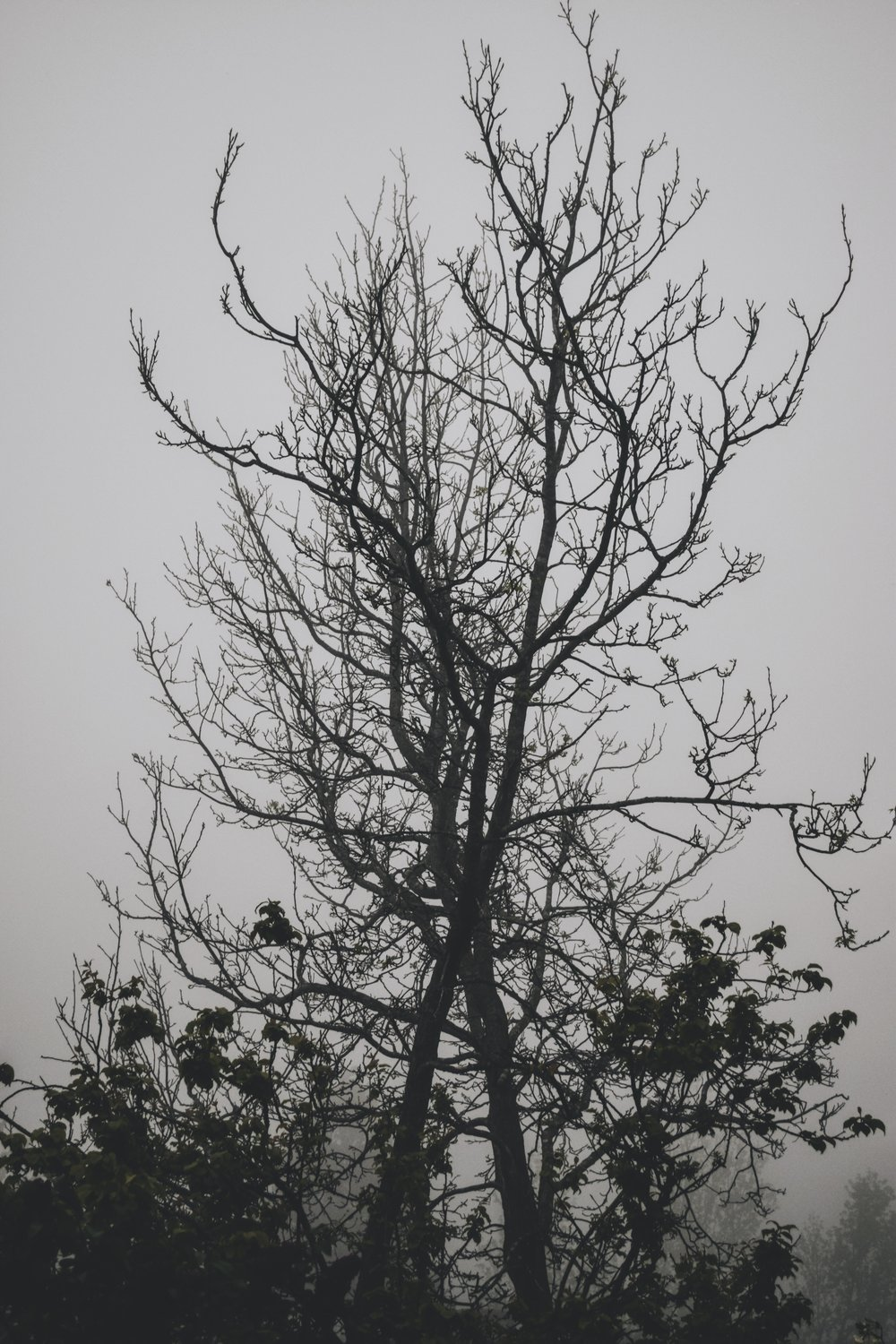 creepy misty trees