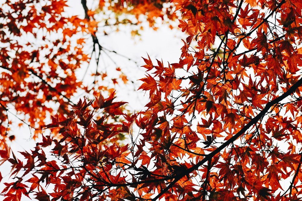 Autumn leaves this is fall