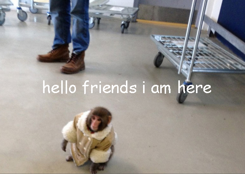 I will never tire of IKEA monkey.