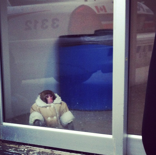 paulftompkins: Steal this look. - Paul zarafs: gunsandrobots: megsokay: jeskeets: IKEA Monkey YOU GUYS. THIS MONKEY IN THIS COAT AT IKEA. MONKEY WEARING A COAT FOUND ALONE IN CANADIAN IKEA AFTER ELUDING STAFF FOR A HOUR. GREATEST NEWS STORY OF ETERNITY. TODAY WE ARE ALL IKEA MONKEY. ALL HAIL IKEA MONKEY.