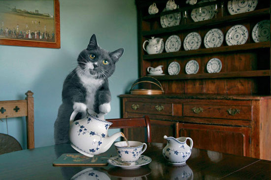 animalstalkinginallcaps: GOOD MORNING. HOW ARE YOU ENJOYING THE MESCALINE? <I CAN READ YOUR THOUGHTS> ARE YOU THIRSTY? I'VE MADE SOME NICE HERBAL TEA. <IT'S POISON> IS EVERYTHING OKAY? <THERE IS NOTHING AFTER DEATH>