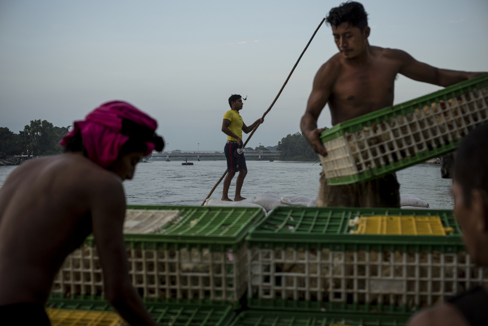Merchants load chickens onto a raft for transport across the Suchiate River into Guatemala in the early morning hours of October 15, 2015.