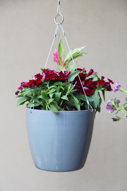 Dianthus & Celosia