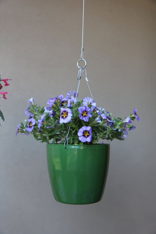 green flower singe 1.jpg