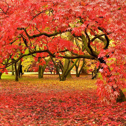 Westonbirt Arboretum, Bristol