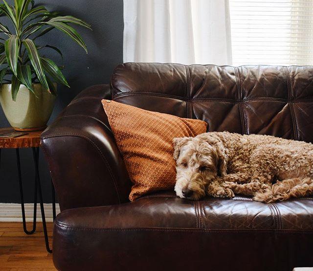 Home is where the doggo is🏠🐾