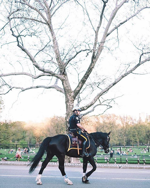Patrol. . May 1, 2018. Central Park, New York. . . . . . #vsco #vscocam #instagram #newyork #street #streetphotography #travel #newyorkcity #explore #instagood #fujifilm