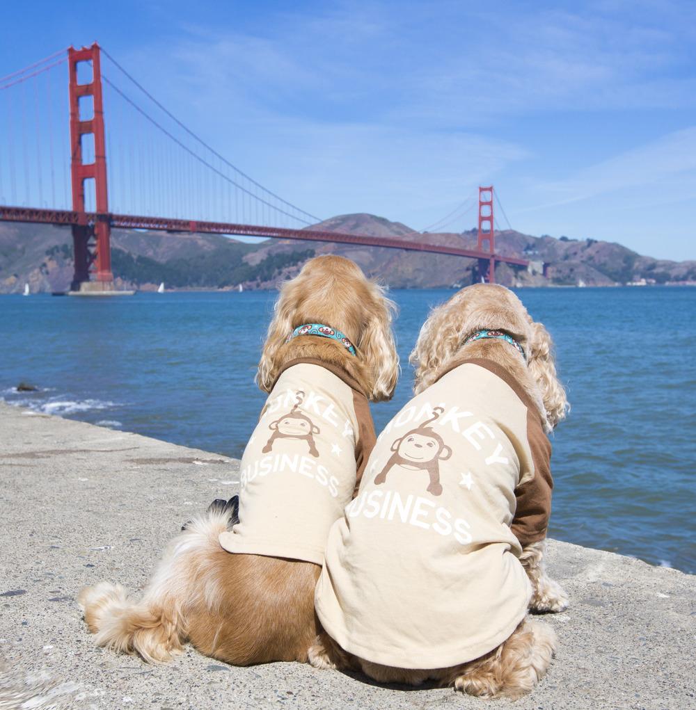 The Monkey Boys take on San Francisco