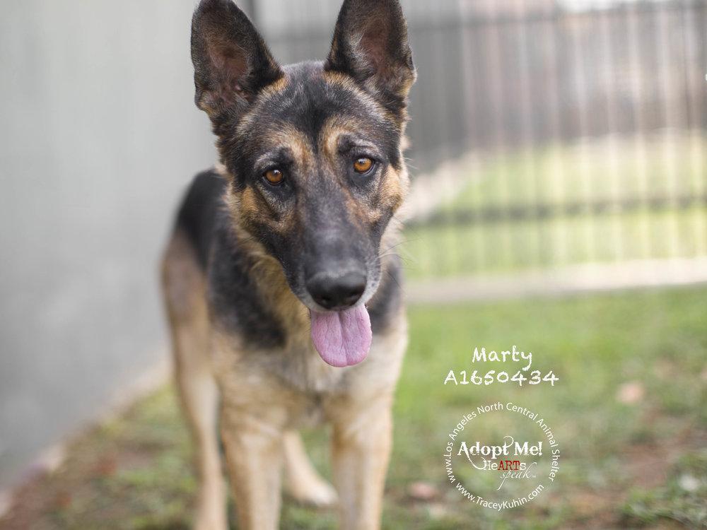 A1650434_Marty2 copy.jpg