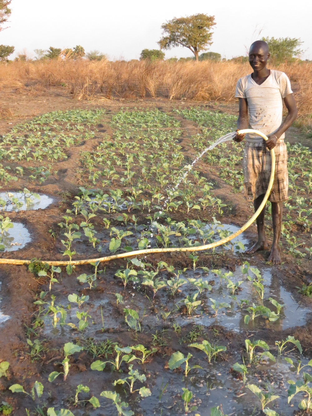 Watering a garden in wau, with water from a wfss well.