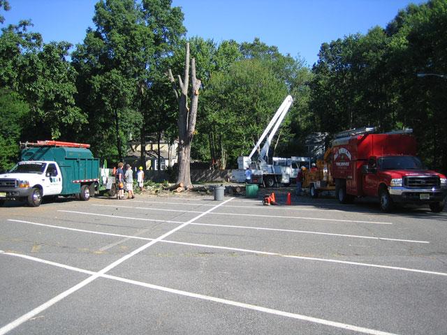 blk-parking-lot-tree-6.jpg